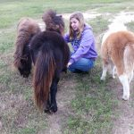 Girl with Miniature Horses